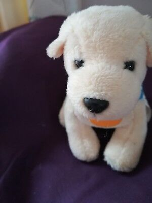 Andrex puppy in training 40th anniversary