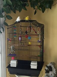 2 budgies with large cage, toys and food.