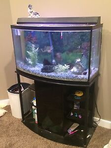 46g Bow front fish tank full setup with fish