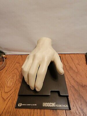 Vintage 1967 Anatomical Model Of Human Hand By Merck Co Dr Office Display