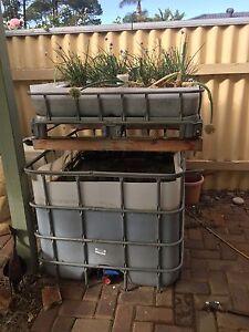 Aquaponics IBC system Kardinya Melville Area Preview
