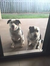 2 family loving dogs Blacks Beach Mackay City Preview