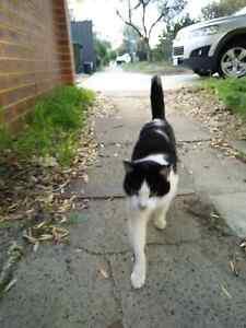 Escaped Cat Darlington Mundaring Area Preview