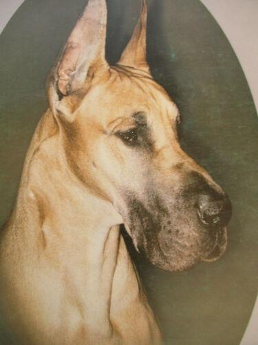 Great Dane Reporter Dog Show AKC Registered Breed History Big Lot Vintage