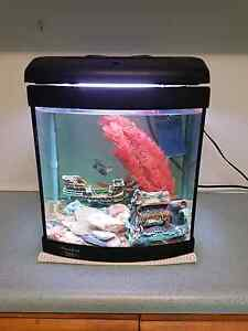Fish tank and fish Burton Salisbury Area Preview