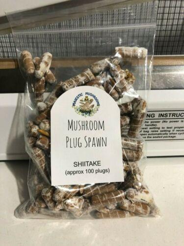 Shiitake Mushroom Plug Spawn 100x- FREE USA shipping