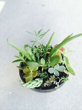 Various potted succulents - gift ideas for office/home Bayswater Bayswater Area Preview