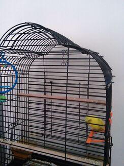 Bird and cage free Redland Bay Redland Area Preview