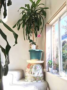pot plants moving quick sale Waverley Eastern Suburbs Preview
