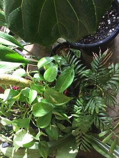 X large-small indoor patio pergola Plants
