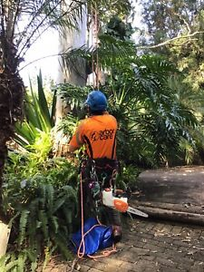 Arborist, Tree removal, Palm removal, Tree pruning, Palm cleaning