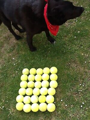 30 used tennis balls Dog Toy