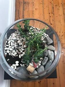 Terrarium Plants Gumtree Australia Port Phillip Port Melbourne