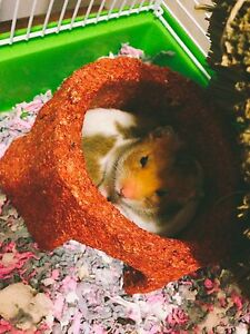 2 sister hamsters to good home