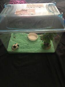 Hermit crab enclosure, Pacific Pines Gold Coast City Preview