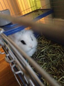 Free rabbit with Cage, food, hay, water bottle and litter