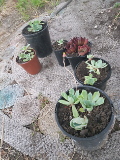 Plants (Succulents mostly)