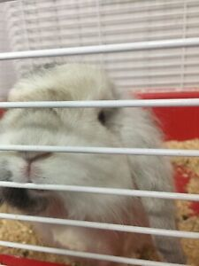 Free Bunny for rehoming