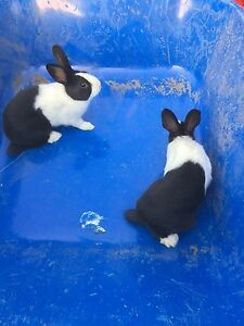 Bunnies For Free