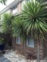 Mature Cordylines Hampton East Bayside Area Preview
