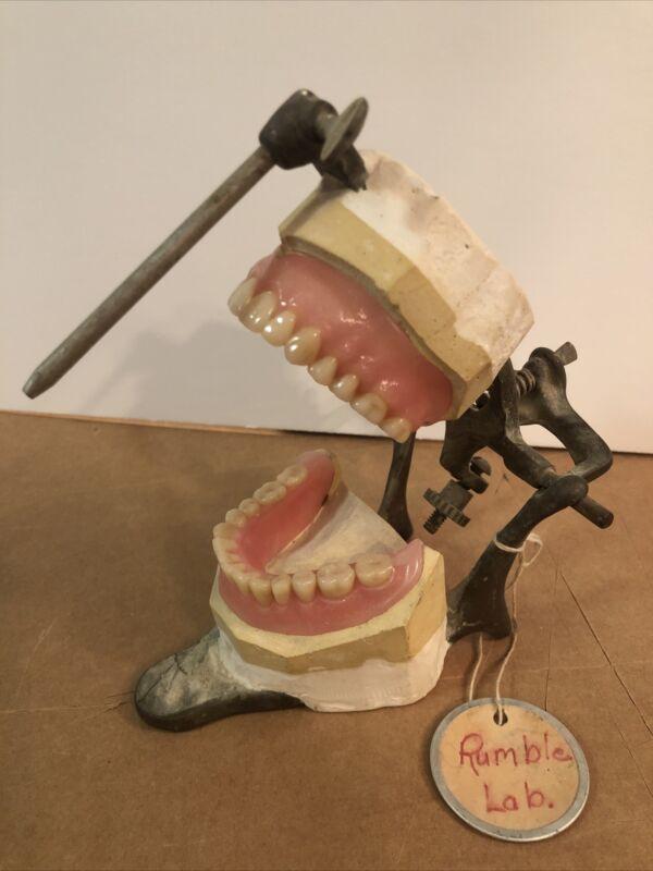 Antique Teeth In Dental Articulator Marked 33  Oddities Macabre Dentistry Rumble