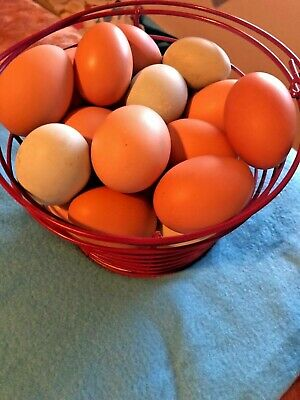 8 4 Free Fertilefresh Barnyard Chicken Hatching Eggs