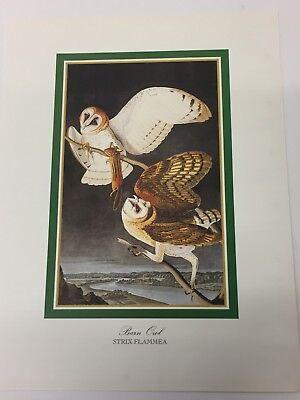 Audubon - BARN OWL - Bird Print 25.5 cm x 19.5 cm Vintage Art Birds FREE P & P