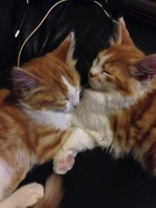 Kittens good homes wanted