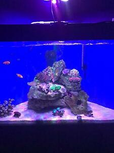 Marine tank Tapping Wanneroo Area Preview