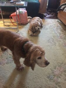 Looking for home for 3 weeks for 2 great dogs