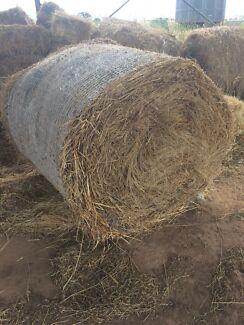Grass hay