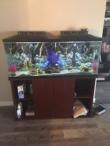55 Gallon Fish Tank / Aquarium