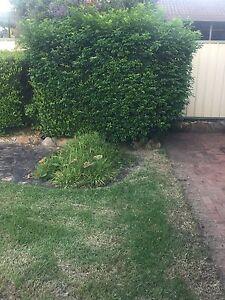 Gardener needed asap St Clair Penrith Area Preview