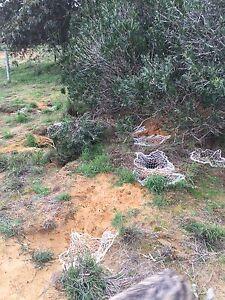 Rabbit control Baldivis Rockingham Area Preview