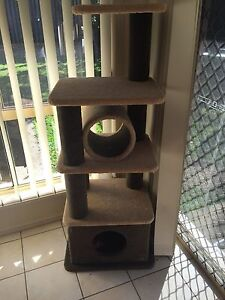 Cat scratcher climber Upper Coomera Gold Coast North Preview
