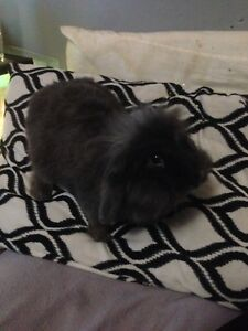 Bunny w/ cage looking for loving home.
