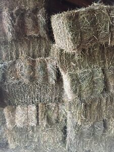 First cut small square bales