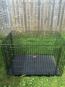 Kong large kennel