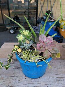 🌿Stupid Cheap Plant Sale 50c/pot 🌿