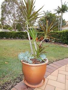 ON LINE GARAGE SALE of Bargain Priced Potted Plants Robina Gold Coast South Preview