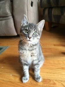 Free kitten to a good home