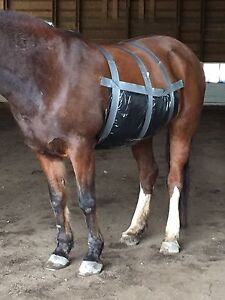 Equine First Aid Training we come to you... Vancouver Island