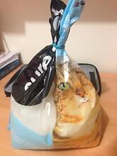 Free cat litter Mount Druitt Blacktown Area Preview