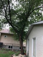 Wanting - Tree Removal