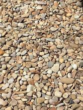 Free river pebbles / stones Willoughby Willoughby Area Preview