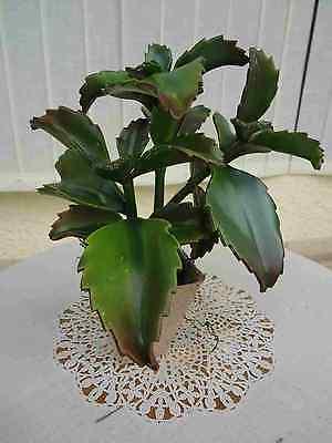 künstliche Kakteen Kaktus Echeveria x 3-ca.40 cm.hoch