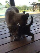 Kitten Farley Maitland Area Preview