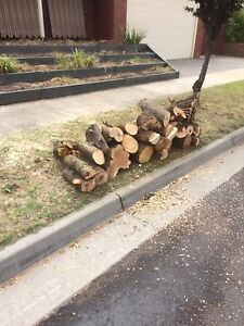 Free firewood Dingley Village Kingston Area Preview