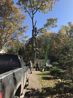 Tree removal/fall clean up