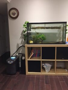 40G Aquarium with Fluval 406 filled with Biohome for sale